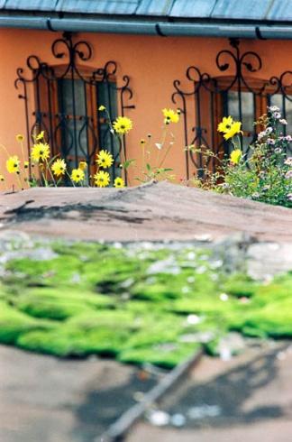 Banská Štiavnica - rozkvitnuté žľaby