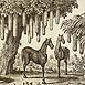 Autor: Peter KĽÚČIK, Ak. maliar, Názov diela: Dvojnohé kone, Technika: lept, Motív: ostatné nezaradené, Rozmery: 16x23, Rok: 2005