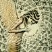 Autor: Igor PIAČKA, Akademický maliar, Názov diela: Anjel, Technika: suchá ihla, mezotinta, Motív: figurálne, akty, Rozmery: 15x11 cm, Rok: 2011