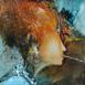 Autor: Marian VIDA, Názov diela: Fragmenty, Technika: olejomaľba, Motív: figurálne, akty, Rozmery: 25x23 cm, Rok: 2021