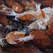 Autor: Zuzana BOBOVSKÁ, Názov diela: Zima začína, Technika: olejomaľba na plátne, Motív: krajina, architektúra, Rozmery: 50x60 cm, Rok: 2009